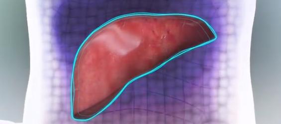 Organovo Liver