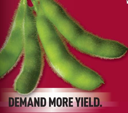 Stine Seed Website Soybean