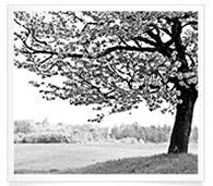 Wetf Tree