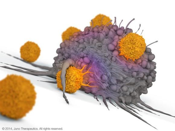 T Cell Picture E