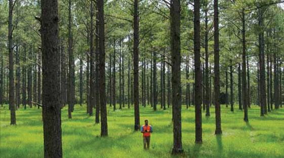 Ryn Forest