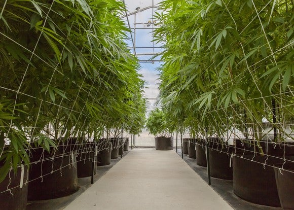 Getty Images Medical Cannabis