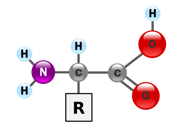 Wikimedia Commons Amino Acid
