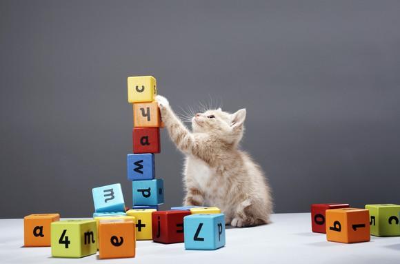 Cat With Blocks