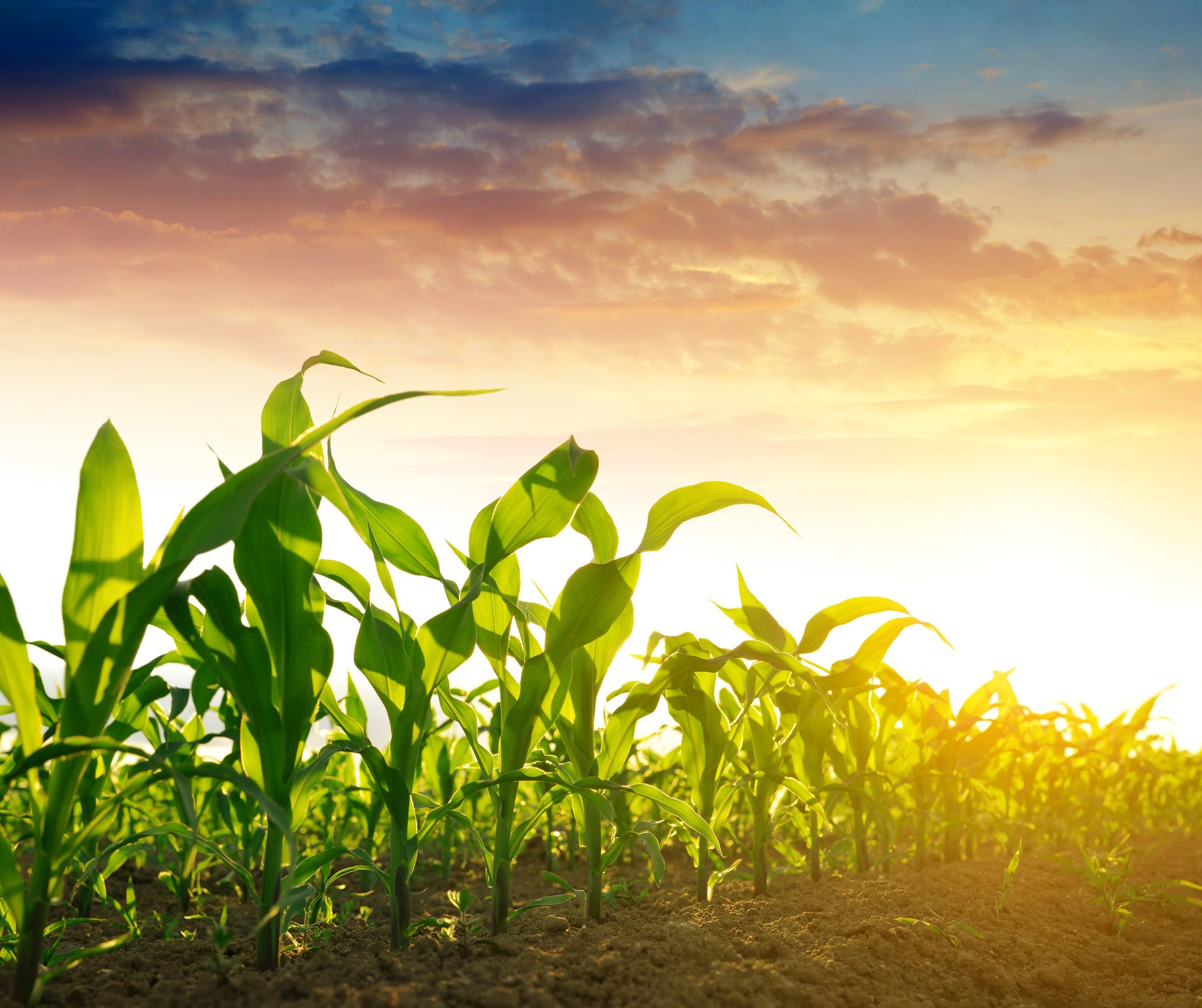 3 Best Agriculture Stocks to Buy   The Motley Fool