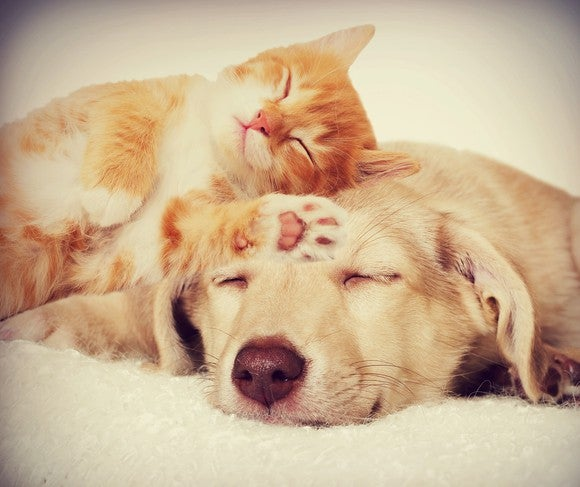 Dog And Kitten Sleeping By Getty