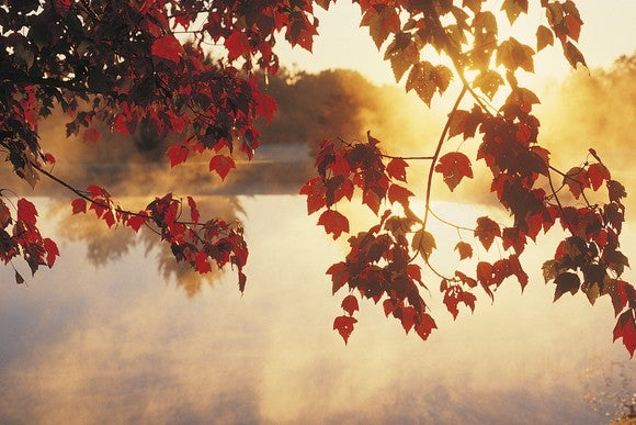 Autumn Leaves And Lake By Getty
