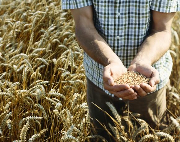 Wheat Field By Getty