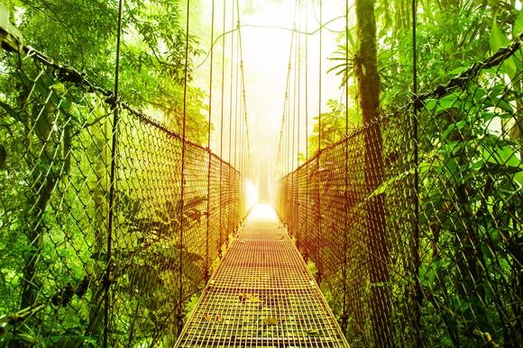 Picture of narrow bridge over a jungle.