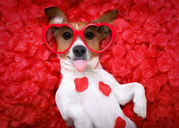 A dog is dressed up for Valentine's Day