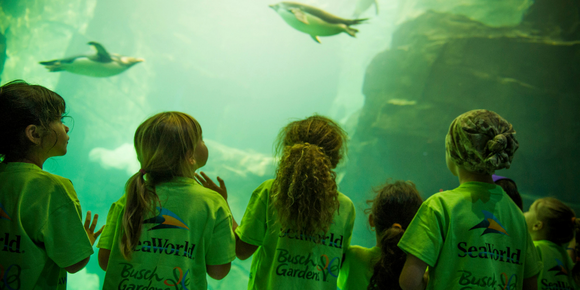 A group of children look into an aquarium filled with marine life
