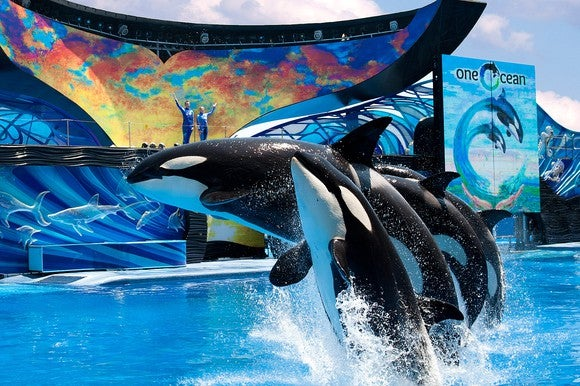 "SeaWorld Orcas jumping in front of a ""One Ocean"" sign"