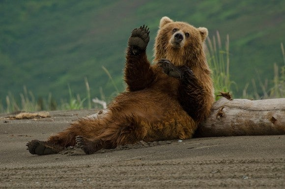 A reclining bear waves at the camera.