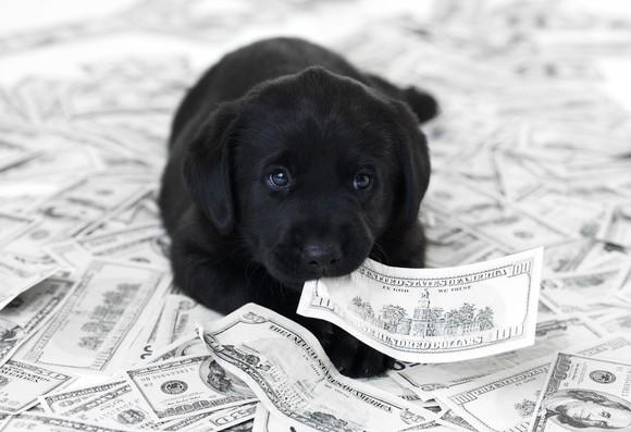 Puppy sitting on money