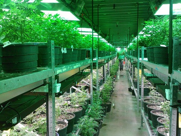 A commercial cannabis grow operations.