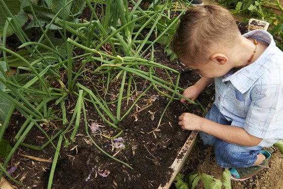 A child planting onions in a garden