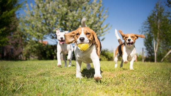 Dogs playing in a park.