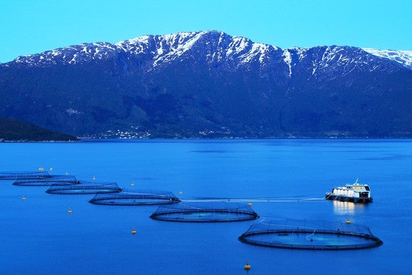 An aquaculture farm.