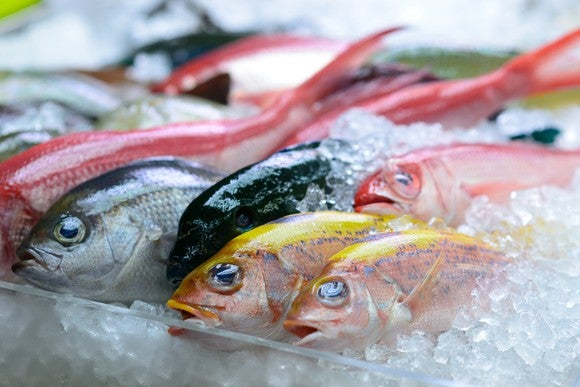 Dead fish on ice.
