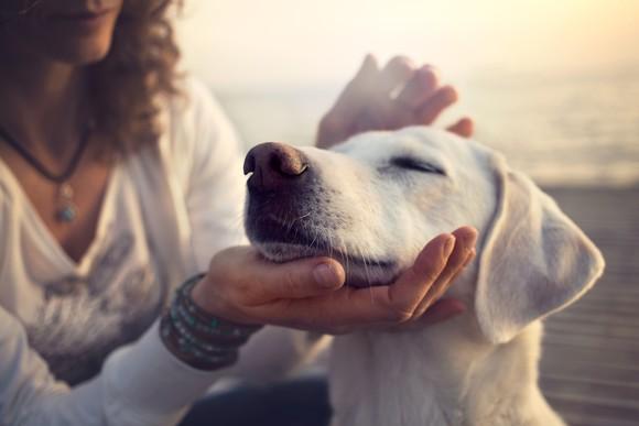 A woman pets a dog on the beach.