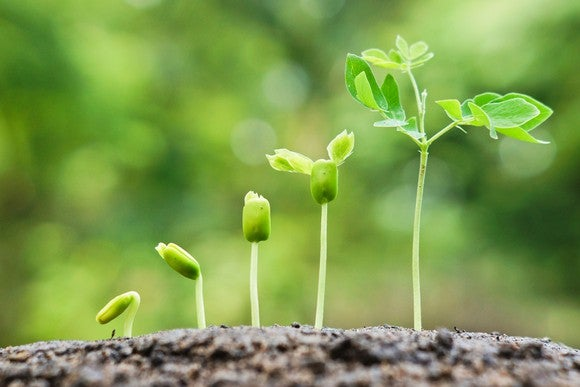 Seedlings positioned in an ascending row representing growth.