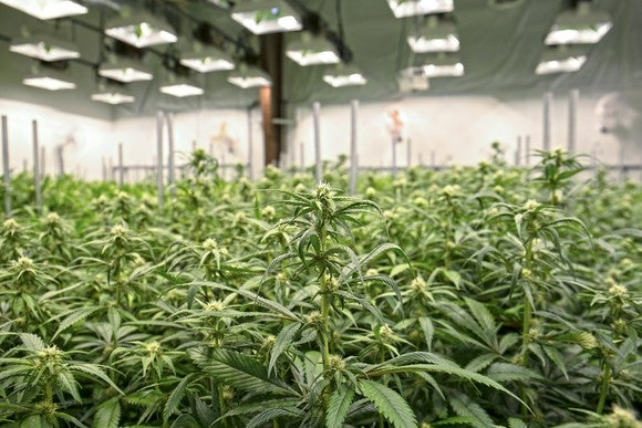Marijuana growing facility.