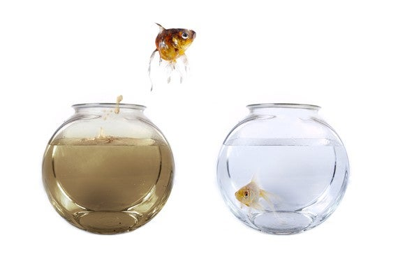 A fish jumping out of dirty water from its fishbowl and into a clean one beside it.