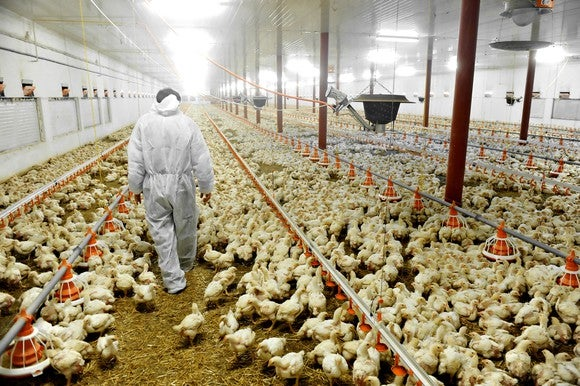 This is where your chicken comes from today.