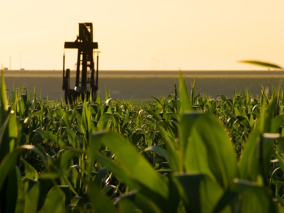 A pumpjack in the middle of a cornfield.