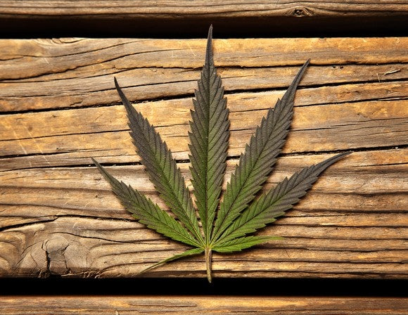 A marijuana leaf on a wooden table.