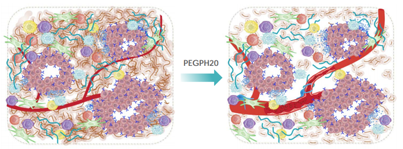 before and after picture of cell structure after adding PEGPH20