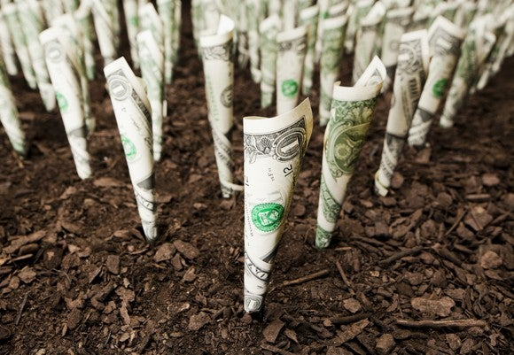 rows of rolled up dollar bills in soil, as if they're growing in a garden