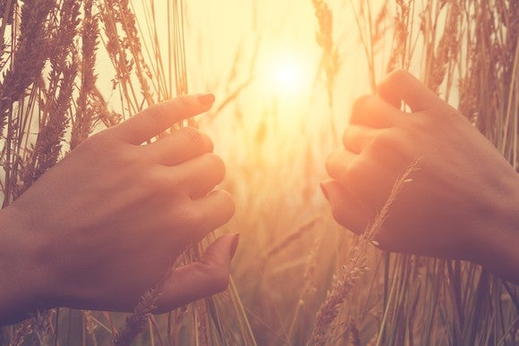 Two hands parting wheat to reveal sunshine behind it