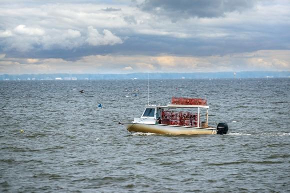 Crab boat on Chesapeake Bay.