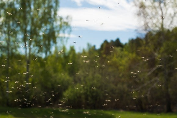 A swarm of mosquitoes flying.