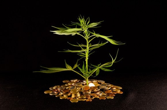 A marijuana plant grows out of a pile of gold coins.
