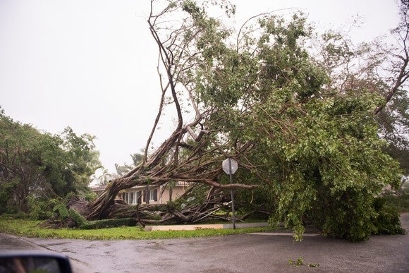 Uprooted tree lying atop house