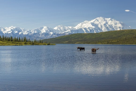 Two moose in a lake, with the Alaska Range of mountains in the background.
