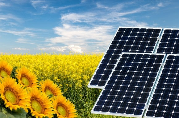 A field of sunflowers and solar panels.