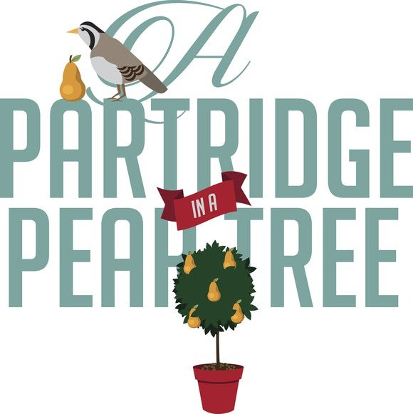 An illustration show a partridge in a pear tree