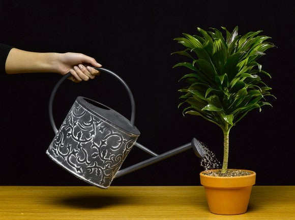 Watering can watering a growing plant.