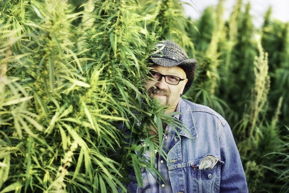A cannabis grower standing next to his crop.