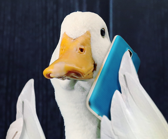 Aflac spokesduck holding blue mobile phone.
