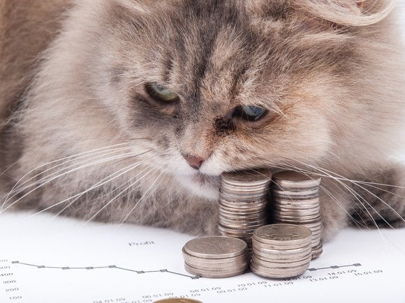A fluffy kitten lords it over some stacks of cold, hard coins.