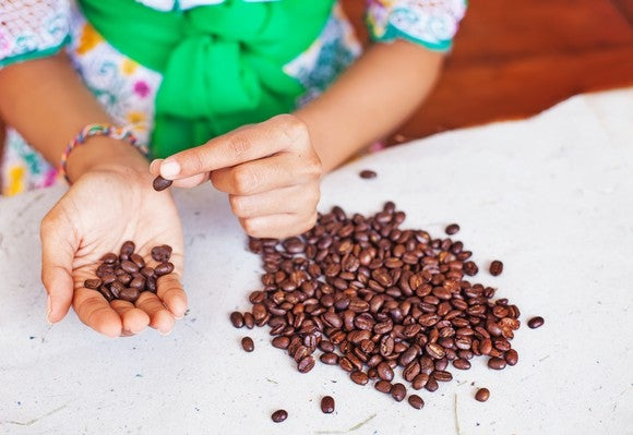 A coffee farmer separating beans by grade.