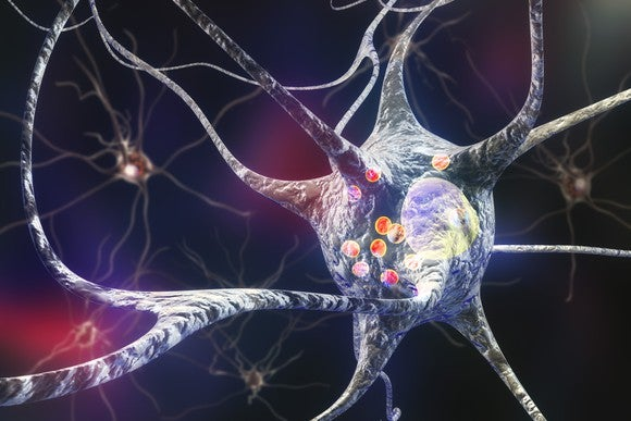 A human neuron transmitting a nerve impulse.