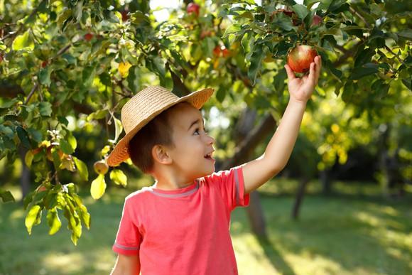 a child picking an apple