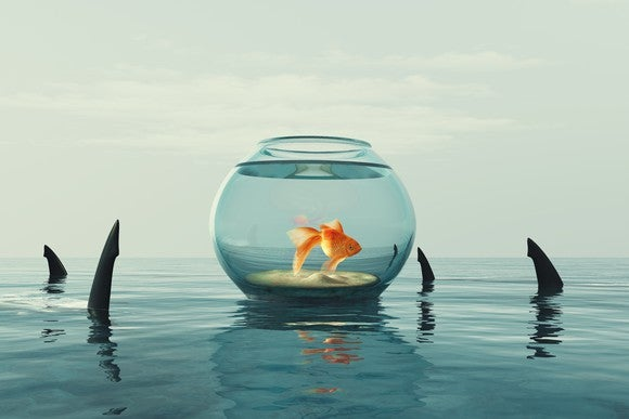 A goldfish in a bowl sits atop water, surrounded by shark fins