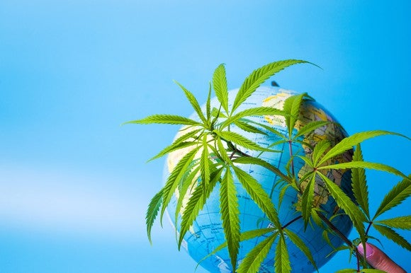 Marijuana leaves in front of globe