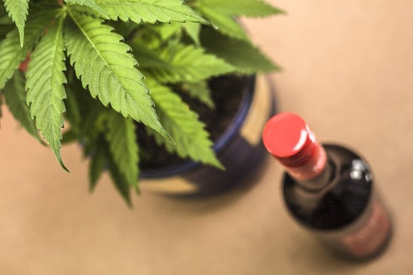 A potted cannabis plant sitting next to a bottle of red wine.